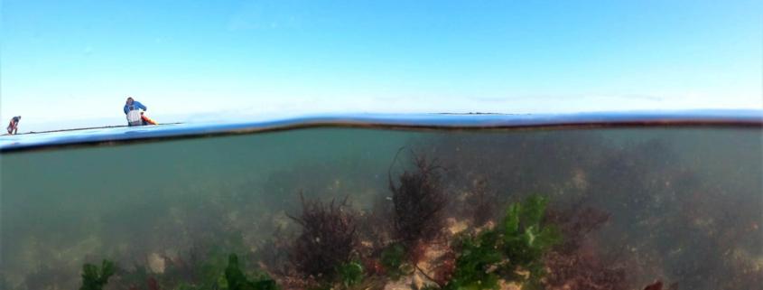 les algues de l'ile de ré - l'océan poumon de la terre
